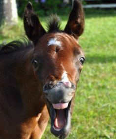 - CUTE THINGS THAT HORSES DO. Horses do all sorts of funny and…