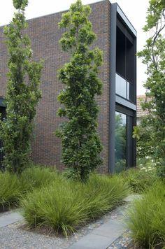 100 ideas for garden design - Modern design for outdoor use - Moderne Häuser - Garten Modern Garden Design, Contemporary Landscape, Modern Design, Modern Landscaping, Front Yard Landscaping, Landscaping Ideas, Outdoor Landscaping, Landscaping Borders, Courtyard Landscaping