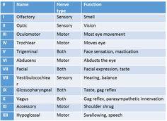 image result for cranial nerves mnemonic | nursing- med/surg, Human Body