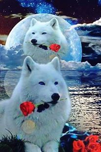 Beautiful, will you accept this rose? Beautiful Wolves, Animals Beautiful, Cute Animals, Wolf Photos, Wolf Pictures, Anime Wolf, Wolf Background, Wolf Painting, Fantasy Wolf