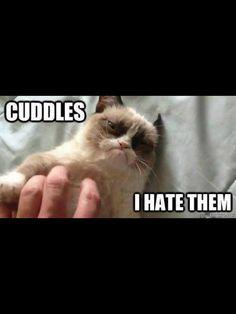 Awwwwww, who's a cute kitty.....