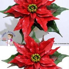 The gum paste Poinsettia is a very impressive Christmas flower and can be made many different colors from white, pink to a deep deep red such as this. What ever color you make the method and process is the same as shared here in this detailed step by step progress pictures.