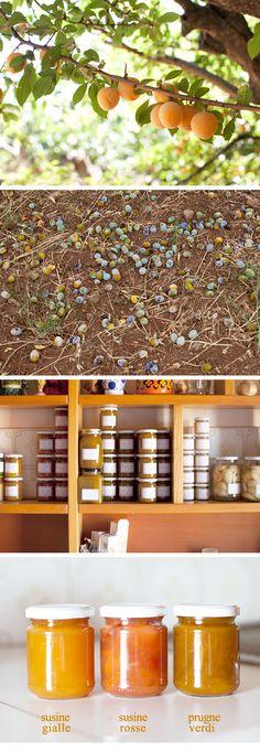 """""""Le Castagnelle"""" produce e vende nella sua fattoria non lontana dalla casa FRUTTA, VERDURA, OLIO EXTRAVERGINE DI OLIVA, VINO ROSSO e altri prodotti rigorosamente biologici."""