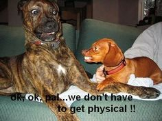 dachshund pictures with cute sayings | Angry Funny Dog