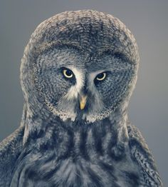 Tim Flach Photography
