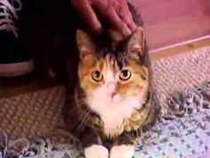 Pit Bull attack - Bravest kitty saves 97 yr old owner!