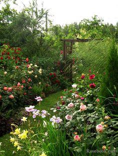 [Garden and photo by Julija Tadeush  (ЮлияТадеуш) Minsk]  lots of time commitment, lovely result