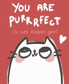 You are purrfect !