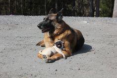 El dúo improbable | Las 100 fotos de perros más importantes de todos los tiempos