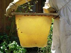 Harvest Top Bar Bee Hive, Bee Pictures, Beekeeping, Bees, Harvest, Good Things, Beehive, Farming, Homesteading