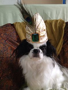 Dog Turban Gold Small Dog Hat by Doginafez on Etsy