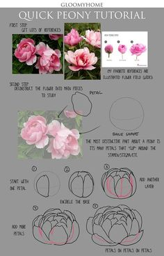 """Flower Drawing tuto pas à pas dessiner une pivoine - """"quick thoughts on peonies (my fav flower)! lmk if there are other sort of flower you'd like to see"""" Peony Drawing, Peony Painting, Watercolor Flowers, Watercolor Art, Drawing Flowers, Flower Drawings, Floral Drawing, Drawing Drawing, Drawing Step"""