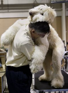 Ken Hudson of Millersville, Pa. gets a loving hug from his 7 month old Afghan Hound Ricardo at the 2006 Keystone Cluster Dog Show at the Farm Show Arena in Harrisburg.