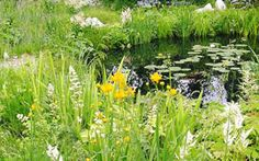 Wildlife pond plantings using British native pond plants for wet area habitats buy mail order