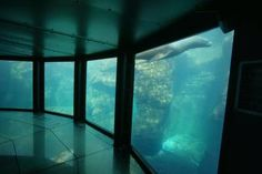 노지카 국립 해양 센터 살아있는 바다관