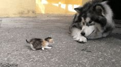 Eu Respeito os Animais... e Vc? – Comunidade – Google+