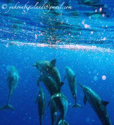 #ILoveBeautifulDolphins #DolphinsRule http://www.amazon.com/gp/product/B00BC39SI4/ref=as_li_ss_tl?ie=UTF8&camp=1789&creative=390957&creativeASIN=B00BC39SI4&linkCode=as2&tag=mob111com-20