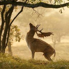 Morning exercise by mschaeferfotografie #animals #animal #pet #pets #animales #animallovers #photooftheday #amazing #picoftheday