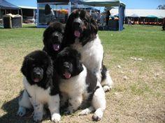 Clancy, Bonnie, Kokoda and Eska <3
