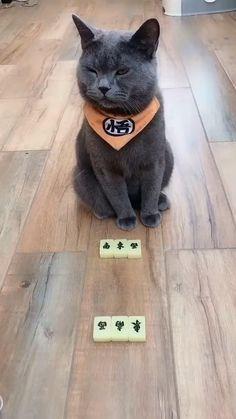 Funny Cute Cats, Cute Baby Cats, Cute Cat Gif, Cute Cats And Kittens, Cute Funny Animals, Cute Baby Animals, Kittens Cutest, Funniest Animals, Ragdoll Kittens