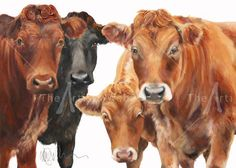 Intriguing by Wendy Darker Dark Paintings, Animal Paintings, Cow Pictures, Holstein Cows, Cow Painting, Farm Art, Cow Art, Pattern Pictures, Watercolor Animals