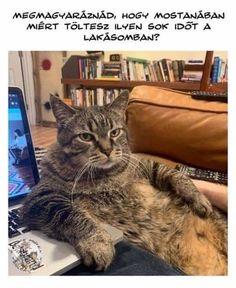 Funny Cats, Funny Jokes, Zoom Call, Cat Sitting, Life Memes, Bored Panda, Animal Memes, Animal Antics, Edgy Memes