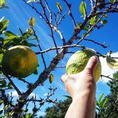 Lemon by melisasian via http://ift.tt/2hBgN9U