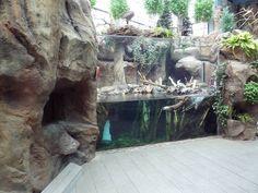 Downtown Aquarium Denver North American Wilderness - River Otter Exhibit