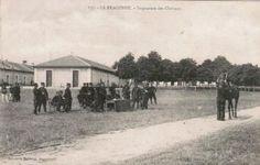 Horse Inspection - France, during World War I