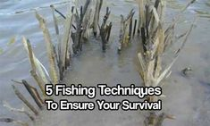 5 Fishing Techniques to Ensure Your Survival. Fish are a nearly perfect source of nutrition and in a long-term (or even a short-term) survival situation