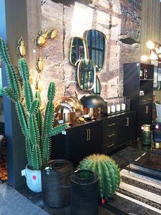 mirrors on distressed wall with cactus greenery
