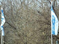 Fluttering Trees: Iso 800, F14, 1/250, Fine Balance