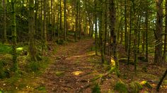 Shallow Forest by Eirik Havre on 500px