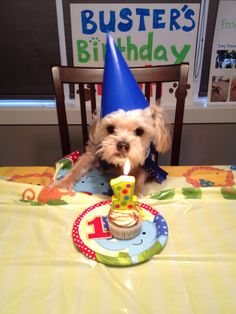Cute Dog Birthday Party Ideas – Page 4 – The Paws Dog First Birthday, Puppy Birthday Parties, Puppy Party, Animal Birthday, Birthday Treats, Birthday Stuff, Birthday Cupcakes, Birthday Quotes, Happy Birthday