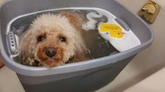 bath time 〜♫ BY HAPPY poodle