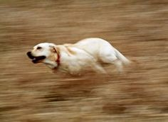Instructions for panning a photo to capture the blur of motion while keeping your subject relatively sharp.