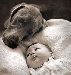 Chien et Bébé = Amour, Protection, Complicité ....