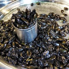 Water beetles street food in Siem Reap. #siemreap #cambodia #travel #yummy #delicious #eat #streetfood #foodadventures #tastetravel #tastetravelfoodadventuretours #sunshinecoast #australia #holiday #vacation #instafood #instagood #followme #localsknow #cookingclass #foodie #foodietour #foodietravel #angkorwat #sightseeing