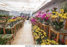 Kunming, China - October 7, 2016: People at the Kunming Dounan Flower Market the biggest flower market in Asia and - Stock Image