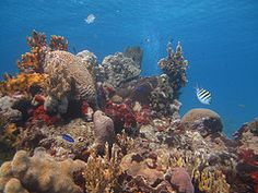 Diving in the Zapata Peninsula