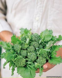 Broccoli is well worth growing, as it is attractive, interesting, and especially tasty and nutritious when freshly harvested.