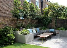 Top 10 best trees for small gardens - Living Colour Gardens Small Trees For Garden, Small City Garden, Small Courtyard Gardens, Small Courtyards, Small Garden Design, Garden Trees, Back Gardens, Small Gardens, Home And Garden