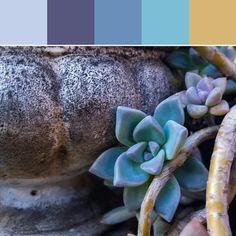 《Pot and Succulent Palette》