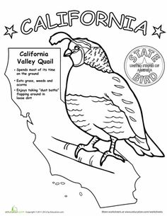 First Grade Animals Life Science Worksheets: California State Bird Kindergarten Social Studies, Kindergarten Art Projects, Kid Projects, Bird Coloring Pages, Coloring Sheets, Coloring Book, States And Capitals, Geography Map, State Birds