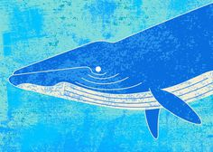 Blue Whale Art Print by Will Ruocco, via Behance