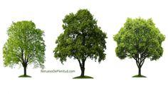 Reflexiones Cristianas: Los Tres Árboles