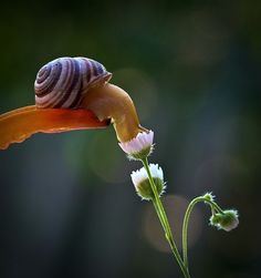Ukrainian photographer Vyacheslav Mishchenko catches these unbelievably stunning up-close photographs of snails, and I've never wanted to be friends with a snail more than this moment.