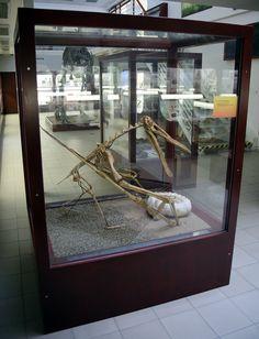 Vystava Albertov