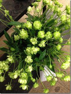 Eclair Spray Rose - Japanese flowers from Mayesh Wholesale Florist Beautiful Flowers, Plants, Japanese Flowers, Spray Roses, Flowers, Floristry, Wholesale Florist, Beautiful Roses, Rose