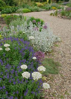 beth-chatto-gravel-garden-allium-nigrum-veronica-gardenista
